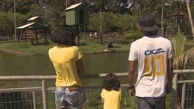 Milhares de turistas visitam o Cigs em Manaus - Zoológico recebe diariamente visitantes de várias partes do mundo.