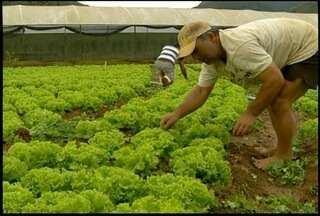Mesmo com queda nas vendas, agricultores de Teresópolis, RJ, torcem para a Seleção - Teresópolis está em ritmo de Copa do Mundo.