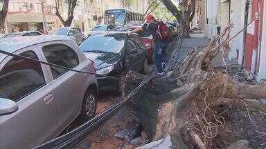 Chuva e vento derrubaram árvore no bairro de Santo Antônio - Depois da queda, a calçada da Rua do Imperador ficou totalmente destruída.