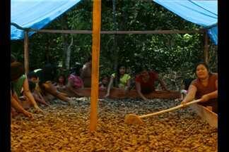 Em Roraima, comunidade indígena se dedica à colheita da castanha do Pará - Óleo de castanha é utilizado na indústria de cosméticos.