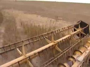 Produtores de soja investem em Piracuruca e colhem bons resultados - Produtores de soja investem em Piracuruca e colhem bons resultados