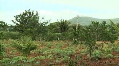 Projeto desenvolvido no interior de Alagoas anima produtores de frutas no estado - Com a rota da fruticultura, produtos poderão ser escoados com mais facilidade.