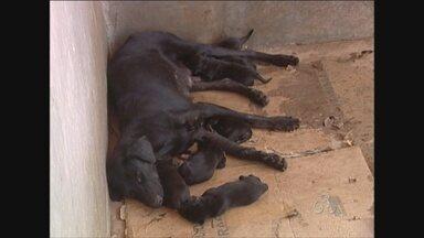 Centro de Zoonoses de Ji-Paraná recebe cerca de cinco animais abandonados por dia - O número preocupa, por isso, uma campanha será realizada para responsabilizar quem não cuidar dos animais.
