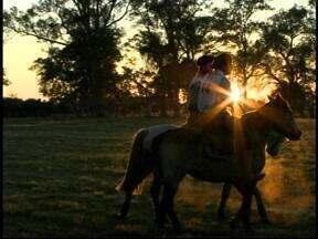 Começa competição de cavalos crioulos em Uruguaiana, RS - Animais serão avaliados de acordo com o tempo levado para concluir as provas.