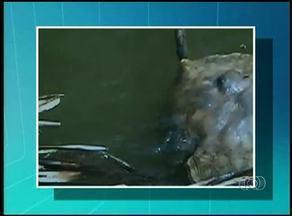 Pescadores encontram mais peixes mortos no rio Lontra em Araguína - Pescadores encontram mais peixes mortos no rio Lontra em Araguína