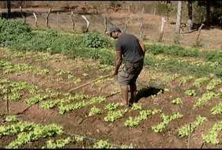 Produtores buscam capacitação para manejo correto das hortaliças - Minas Gerais tem a segunda maior área plantada de hortaliças do Brasil