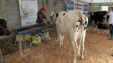 Consumidores de Juiz de Fora pesquisam preços para lidar com aumento do leite - De acordo com levantamento da Prefeitura de Juiz de Fora, o produto era encontrado nas prateleiras por R$ 2,17 no início do ano. Hoje o preço médio é de R$ 2,30.