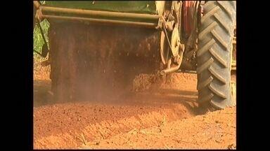 Agricultores de Suzano (SP) tentam manter produção sem depender muito da água - A seca no estado deixa muito agricultor sem ter como irrigar as lavouras. Mas o uso de um composto tem ajudado a manter a produção mesmo com a estiagem.