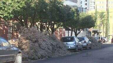 Moradores reclamam do acúmulo de galhos nas calçadas de Ribeirão Preto - Problema é mais grave no Jardim Irajá, onde árvores foram podadas, mas a sujeira está atrapalhando motoristas e pedestres.