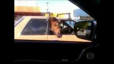 Cavalo é flagrado dentro de carro em Fortaleza - O animal está sentado no banco de trás do veículo que trafegava pela BR-116.