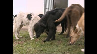 Cachorros de Caçapava do Sul (RS) devem receber microchips de identificação - A lei foi aprovada neste mês e o município deve instalar o dispositivo em mais de mil animais até o fim do ano.