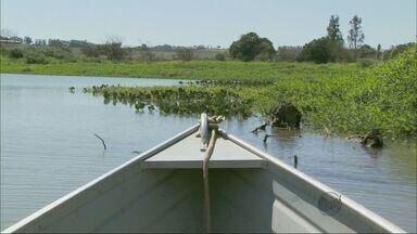 Peixes desaparecem com estiagem no Rio Grande em Passos (MG) - Peixes desaparecem com estiagem no Rio Grande em Passos (MG)