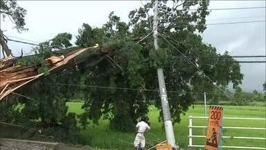 Tufão deixa dez mortos e 86 feridos no Japão - A passagem do tufão Halong pelo Japão deixou dez mortos, dois desaparecidos e 86 feridos. Nesta segunda-feira (11), rebaixado à categoria de tempestade tropical, o tufão seguiu em direção ao norte do país.