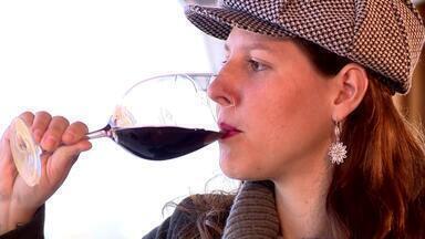 Produção vinícola na Serra catarinense movimenta a economia do estado - Assista ao vídeo.