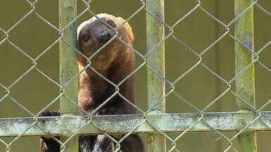 Saiba os cuidados para evitar acidentes durante um passeio ao zoológico - Saiba os cuidados para evitar acidentes durante um passeio ao zoológico