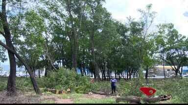 Árvores próximas de rodoviária de Vitória são cortadas a mando do governo do ES - Derrubada faz parte do projeto Portal do Príncipe, que facilitará trânsito em Vitória.