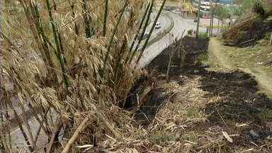 Deficiente físico morre queimado ao cair em vegetação em chamas em Barra Mansa, RJ - Moradores tentaram ajudar homem, de 47 anos, mas incêndio tomou conta de onde ele estava; fogo chegou a quase três metros de altura.