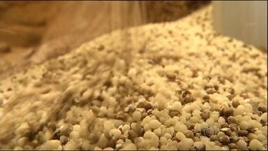 Agricultores começam a preparar insumos para produção da soja - Os agricultores já começaram a comprar os fertilizantes, sementes e adubos para a safra de verão da soja. O problema é que os custos desses insumos aumentou cerca de 5% e isso vai refletir nos preços dos grãos.