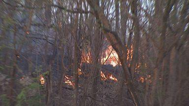 Mata pega fogo em Ribeirão Preto - Incêndio atingiu área que fica no bairro Monte Alegre. Ainda não se sabe como o fogo começou.
