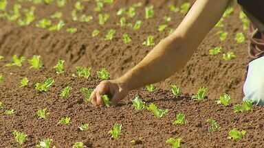 Produtores rurais de São Carlos, SP, fazem plantio - Agricultores plantam produtos que serão cultivados após a chegada da Primavera.