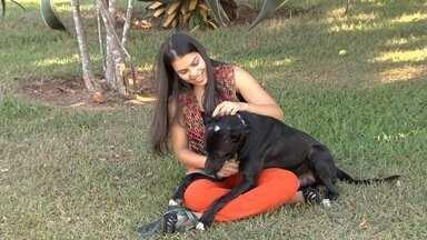 """JA apresenta série """"Amigo Fiel"""" - Reportagens mostram o carinho entre dono e cães de estimação, o mercado movimentado pelos animais e também os maus-tratos contra os cachorros."""