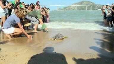 Crianças acompanham soltura de tartaruga marinha em Vitória - Ação foi uma atividade promovida pelo Projeto Tamar no Dia das Crianças.
