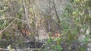 Em Manacapuru, no AM, queimadas põe a vida de animais silvestres em risco - Tradição agrícola da queimada infringe a lei e é feita em grande escala na zona rural do estado.