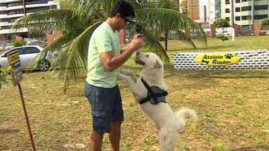 'Dog Fest' atrai amantes dos animais - A 'Dog Fest' reuniu amantes dos animais de estimação em incentivo aos cuidados com o bicho. Feira de adoção, buffet para cachorros e informações de técnicas de adestramento fizeram parte do evento.