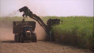 Estiagem prejudica a safra de cana produzida em propriedades de SP - A quebra da safra é calculada em mais de 20% no noroeste do estado. A redução da área de plantio deve afetar a safra de 2015.