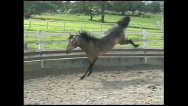 Em quatro anos, haras baiano ganha 26 títulos nacionais - A propriedade fica em São Gonçalo dos Campos é um haras de cavalos da raça Mangalarga Marchador. Veja na primeira reportagem da série especial do programa sobre fazendas.