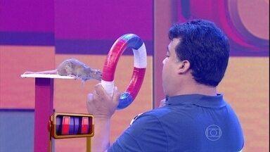 Dupla de camundongo tem que fazer acrobacias no palco - Dupla de pai e filha que adestram os animais