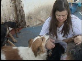 Número de cães com leishmaniose aumenta em Pres. Prudente - Lei tenta minimizar riscos de transmissão.