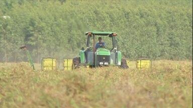 Agricultores retomam o plantio da soja no Mato Grosso do Sul - Após alguns dias de chuva, os agricultores retomaram o plantio da soja. A volta da estiagem preocupa o agricultor.