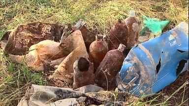 Fiscais do Ibama apreendem agrotóxicos descartados irregularmente em fazenda de São Paulo - Os fiscais receberam uma denúncia anônima de que no local estavam enterrados mais de 14 mil litros de defensivos agrícolas. Há a suspeita de contaminação do solo.