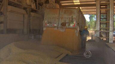 Crescimento da produção de milho aumentam os desafios de agricultores - Nesta safra, MS produziu 8 milhões de toneladas de milho. Produtores sentem a dificuldade para o armazenamento e escoamento do grão