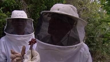 Em Alagoas, pescadores se transformam em apicultores e produzem própolis vermelha - Produto tem propriedades medicinais e começa a ser usado em tratamento contra o câncer.