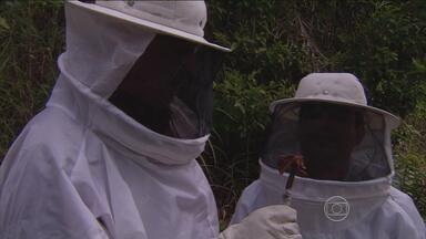 1º Bloco | Em Alagoas, pescadores viram apicultores e produzem própolis vermelha - Produto começa a ser utilizado no tratamento do câncer.