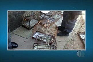 Polícia Ambiental faz apreensão de animais silvestres em Itaquaquecetuba - Foram quase 20 animais, entre eles estava um lagarto.
