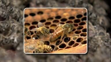 Tela excluidora garante que melgueira armazene apenas mel - Para que as melgueiras não fiquem cheias de crias é preciso usar uma tela excluidora, encaixada entre o ninho e a melgueira. É possível comprar em casas de produtos para apicultura. O preço varia muito, de R$ 25 a R$ 70. É importante fazer a revisão periódica dos seus enxames.