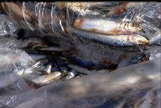 IBAMA fiscaliza a pesca da sardinha e apreende mais de uma tonelada do peixe em Búzios - A espécie está em época de defeso e a pesca predatória é crime.