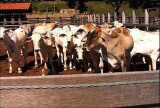 Termina etapa da campanha contra a febre aftosa no Ceará - Região do Cariri conta com mais de 600 mil animais.