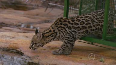 1º BLOCO | Reportagem mostra riqueza natural do Boqueirão da Onça - Local é uma das maiores áreas de caatinga preservada do planeta.