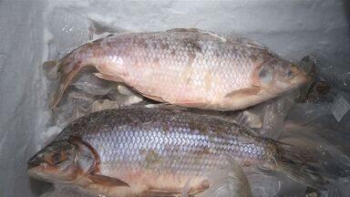 Consumo de peixe é considerado baixo em MS - Pesquisa feita pelo IBGE mostrou como está a saúde do Brasileiro. O levantamento mostra o alto consumo de carne vermelha no estado