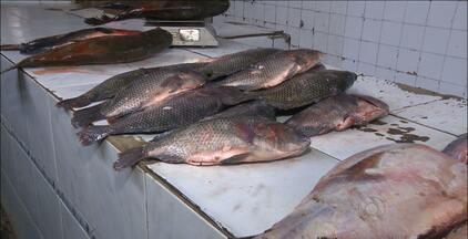 Paraíba é uma das principais produtoras de tilápia do país - A cidade de Bananeiras produz cerca de 600 toneladas do peixe por ano.