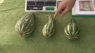 Pesquisador escocês cria adubo orgânico e garante bons resultados em horta em Maria Helena - Pesquisa é aplicada em sítio em Maria Helena. O pesquisador diz que consegue uma produção 40% maior com o adubo.