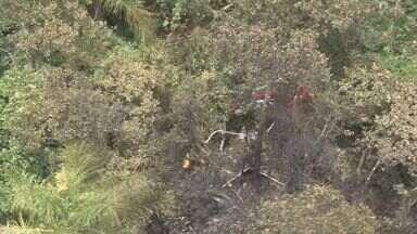 Helicóptero cai em Bertioga, no litoral de SP, e mata cinco pessoas - Marcelo Müller, Lumara Rocha Passos Müller, a menina Geórgia, o piloto Thiago Yamamoto, e a babá da criança, ainda não identificada, morreram no acidente.