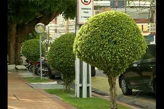 Plantio inadequado de árvores pode representar risco para a população - Algumas espécies não podem ser plantadas em Belém.