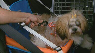 Confira as regras para transportar animais de estimação sem ser multado - Confira as regras para transportar animais de estimação sem ser multado