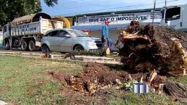 Forte chuva causa estragos no centro de São José dos Campos, SP - Pancadas de chuva derrubaram árvores na cidade.