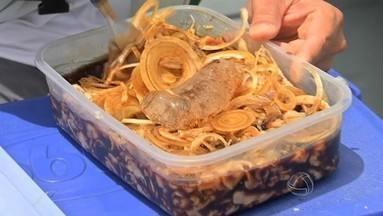 Veja como preparar uma receita pantaneira, o sashimi de piranha - Veja como preparar uma receita pantaneira, o sashimi de piranha